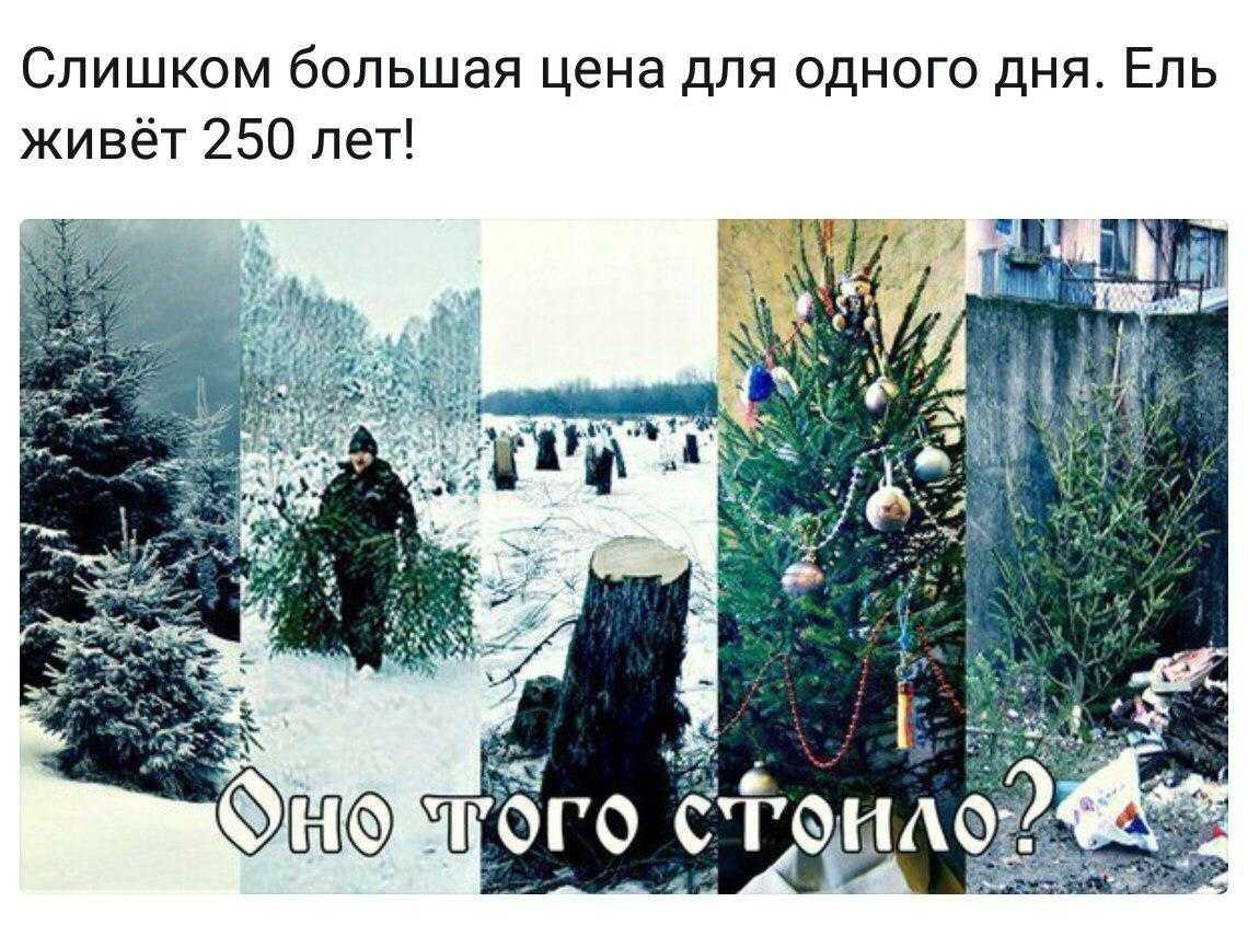 Про елки на Новый год - точно ли надо срубать елки, чтобы отметить праздник
