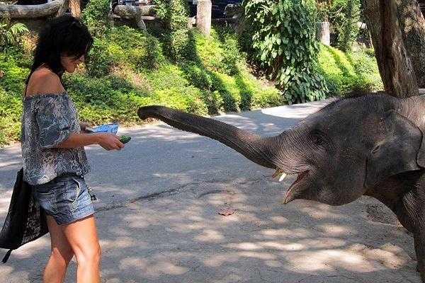 Зоопарк в Чиангмае (Таиланд)