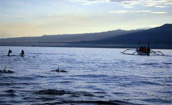 дельфины на севере Бали