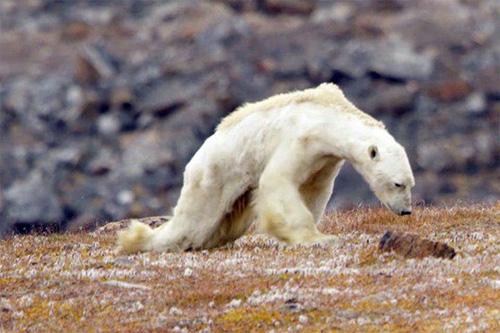 Мир на грани глобальной климатической катастрофы