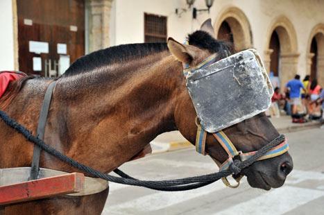 Точно зашоренная лошадь, ты не видишь в нем ничего, кроме самого себя. Карлос Кастанеда